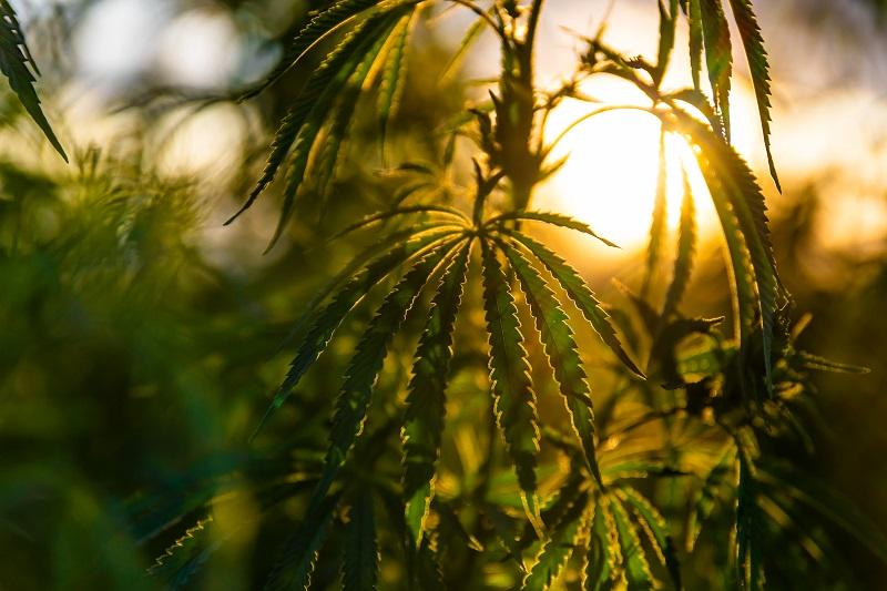nasiona outdoor